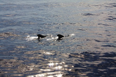mago merlin: Merlin ballenas en el oc�ano Atl�ntico