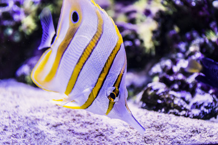 cartilaginous: fish swim with corral