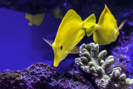 rare rocks: fish swim with corral