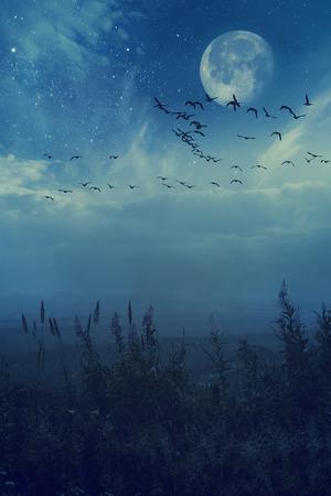 migratory: Night background concept migratory birds Stock Photo