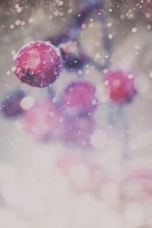 blizzards: Winter background frozen berries bright bokeh Stock Photo