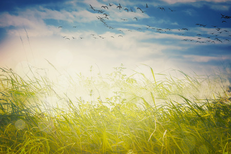 migrating birds: Abstract landscape migratory birds background