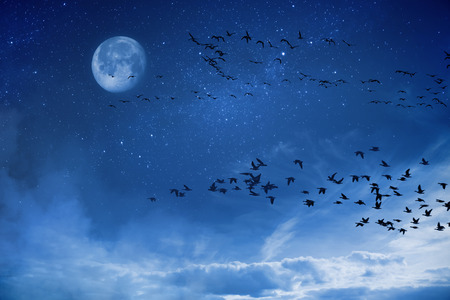migratory: Night background concept migratory birds Stock Photo
