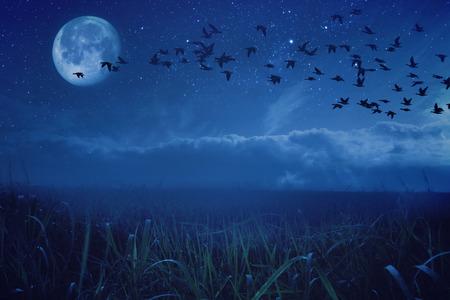 migratory birds: Night background concept migratory birds Stock Photo