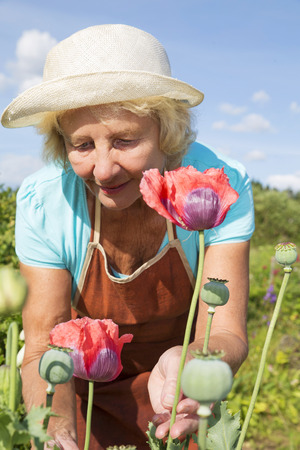 backyard woman: Senior woman taking care of flowers in her backyard garden Stock Photo