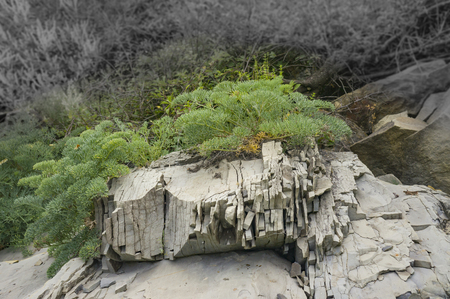 survive: Plants are forced to destroy the rocks to survive in harsh conditions. background