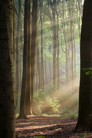 Sunny morning in an early autumn forest; sun rays are visible in a light haze.