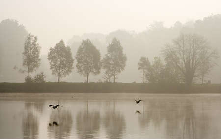 Two herons flying over pond in a misty morning Stock Photo - 1929461