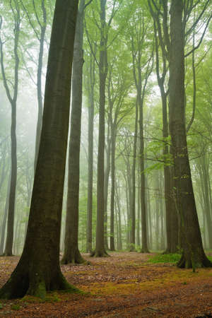 scenic view on summer forest in a misty moring Stock Photo - 8173565