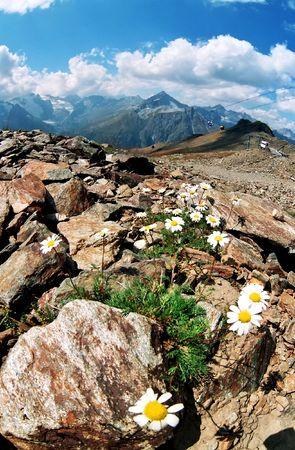 pictoresque: Flowers in Dombai.Karachai.Caucasus.Russia. Stock Photo