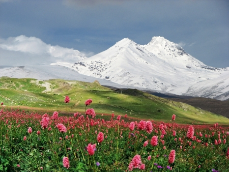 Mountains of the Caucasus in summer day,Armenia. Standard-Bild