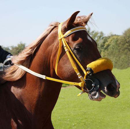 pyatigorsk: Before horse race. Hippodrome in city Pyatigorsk,Northern Caucasus,Russia. Stock Photo