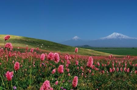 Mountain Ararat,Armenia. photo
