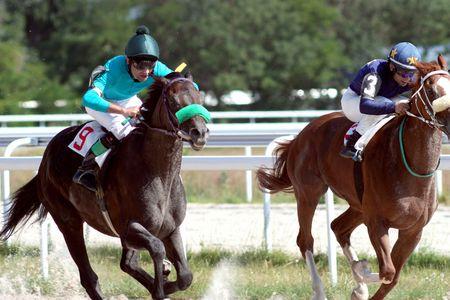 pyatigorsk: Cavallo da corsa. Pyatigorsk, nel Caucaso settentrionale, in Russia.