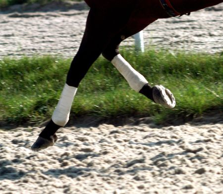 horse competition: Selective focus on the horseshoes.