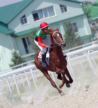 pyatigorsk: Lo stallone fantino e arabi.Ippodromo in citt� Pjatigorsk, Caucaso, la Russia.