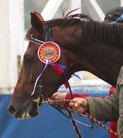 pyatigorsk: PYATIGORSK, RUSSIA - SEPTEMBER 26: The race for the prize of the