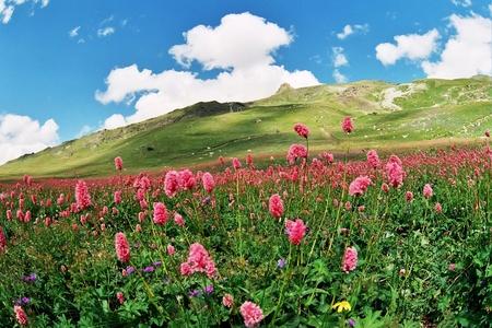 Summer in Dombai,Western Caucasus,Russia.