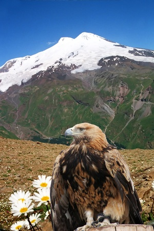 caucasus: Snow-covered top of Elbrus and the eagle.(5642 m height), Balkaria,Central  Caucasus, Russia. Stock Photo