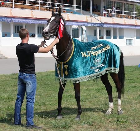pyatigorsk: PYATIGORSK, RUSSIA - 21 agosto: Un sposo non identificato e cavallo Akhal-Teke, nero mare Tropa dopo la gara per il premio di Cherkezovoi agosto 21,2011 in Pyatigorsk, Caucaso, Russia. Editoriali