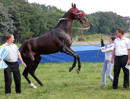PYATIGORSK, RUSSIA - SEPTEMBER 4: An unidentified groom and akhal-teke horse, black stallion Patron after race for the prize of Melekusha on September 4,2011 in Pyatigorsk, Caucasus, Russia.  Stock Photo - 10499723