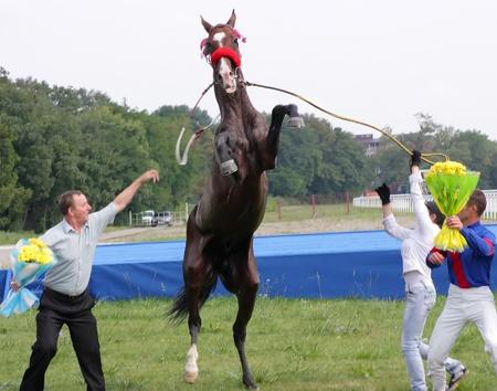 PYATIGORSK, RUSSIA - SEPTEMBER 4: An unidentified groom and akhal-teke horse, black stallion Patron after race for the prize of Melekusha on September 4,2011 in Pyatigorsk, Caucasus, Russia.  Stock Photo - 10499721