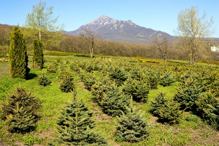 Perkalsky Dendrological nursery (foot of Mashuk),Northern Caucasus,Russia. photo