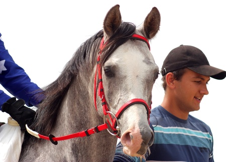 Un cheval marié et arabe, étalon gris Predprinimatel. après la course pour le prix de printemps.