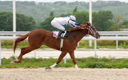 Action shot of jockeys in horse race,Northern Caucasus