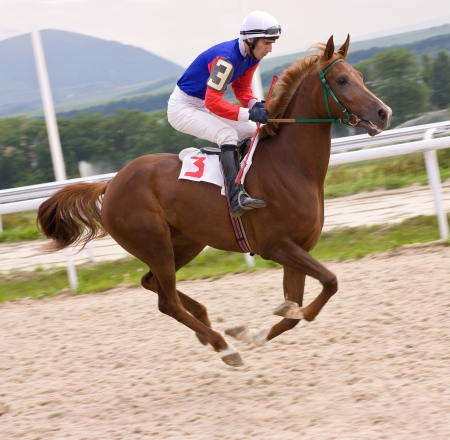 cavallo in corsa: Colpo di azione dei fantini in corsa di cavalli, Pyatigorsk, Caucaso.