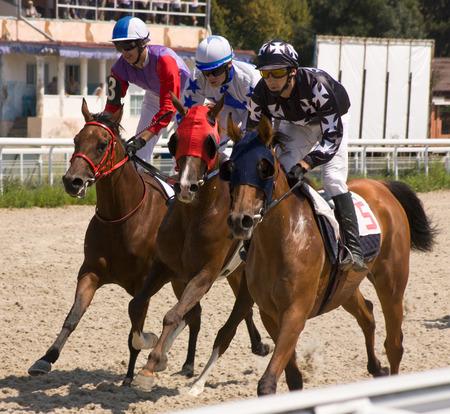 akhal teke: Horse race for the prize Pyatigorsk,Northern Caucasus,Russia. Stock Photo