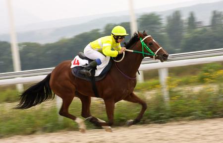 caballo corriendo: La carrera por el Premio de la Letni en Piatigorsk, norte del C�ucaso, Rusia. Foto de archivo