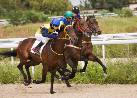 carreras de caballos: Iniciar puertas para las carreras de caballos para el premio de Piatigorsk, norte del C�ucaso, Rusia.