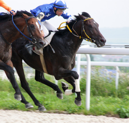 pyatigorsk: Start gates for horse races for the prize of Letni in Pyatigorsk,Russia.