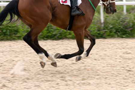 corse di cavalli: Corsa dei cavalli in pista di sabbia. Archivio Fotografico