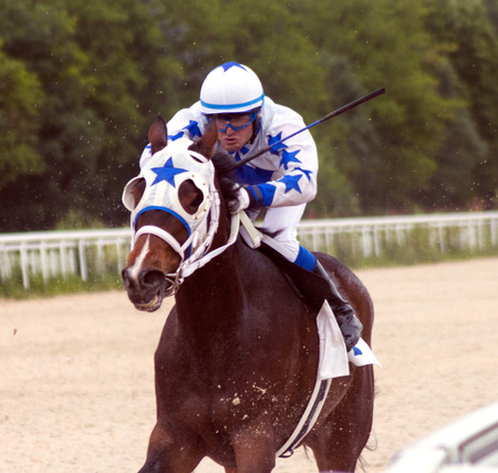 thoroughbred horse: The race for the prize of the Taktiki
