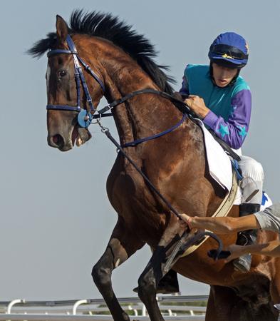 corse di cavalli: Prima di cavallo cercando di ripristinare fantino prima della Racing Start