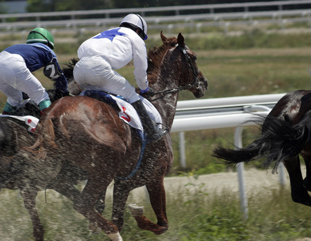 thoroughbred horse: The race for the prize of the Derby in Pyatigorsk.