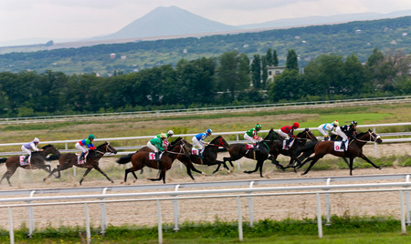 thoroughbred horse: The race for the prize of the Elita in Pyatigorsk,Northern Caucasus,Russia. Stock Photo