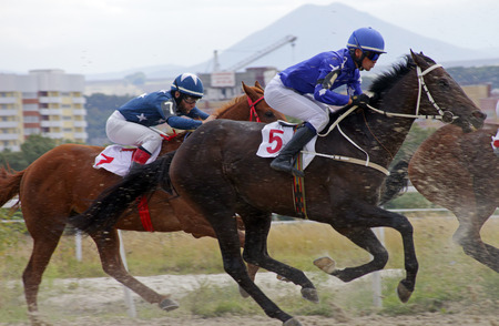 pyatigorsk: Pyatigorsk, Russia - September 18,2016: Start horse race for the prize of the Stilistiki, Russias largest hippodrome in Pyatigorsk,Caucasus,Russia on September 18,2016.