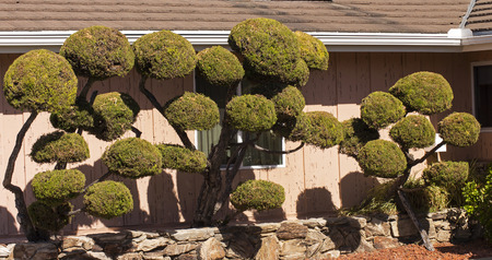 pacific ocean: Beautiful tree on the Pacific Ocean in San Diego,California. Stock Photo