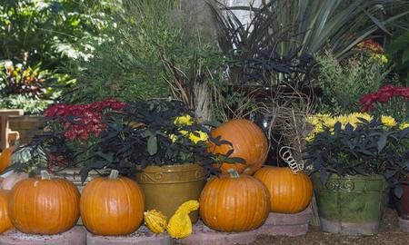 Autumn pumpkin in Balboa park in San Diego