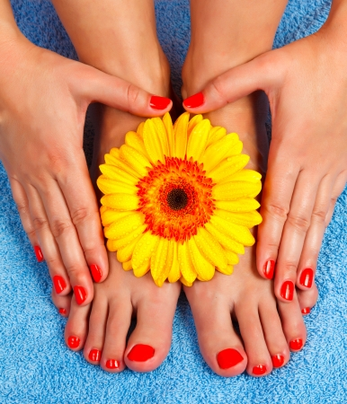 manicure, pedicure on hands of a young woman and gerbera and blue towel