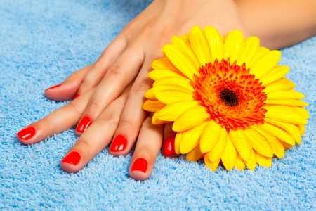 manicure on hands of a young woman and gerbera and blue towel photo