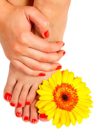 pedicure feet and manicure on hands of a young woman and yellow gerbera flower isolated on white background photo