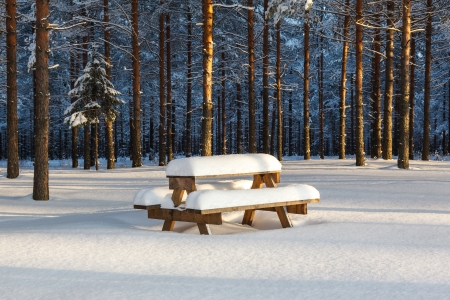 Winter pine forest and a table with benches under a layer of snow Stock Photo - 18084710