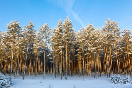 russian winter and trees in snow blue sky Stock Photo - 18084841