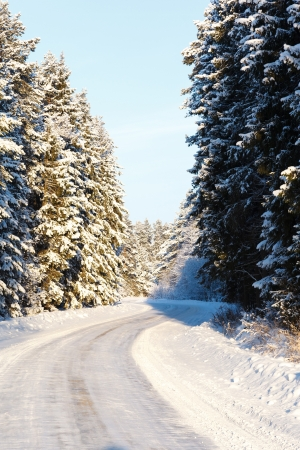 russian winter road and trees in snow blue sky Stock Photo - 18084721
