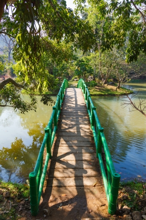 Bridge to the jungle,vietnam photo
