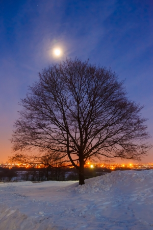 tree and moon on winter landscape photo